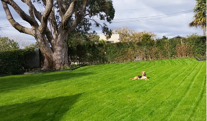Lawn mowing auckland lawn mowing lawn mowing services for Auckland landscaping services